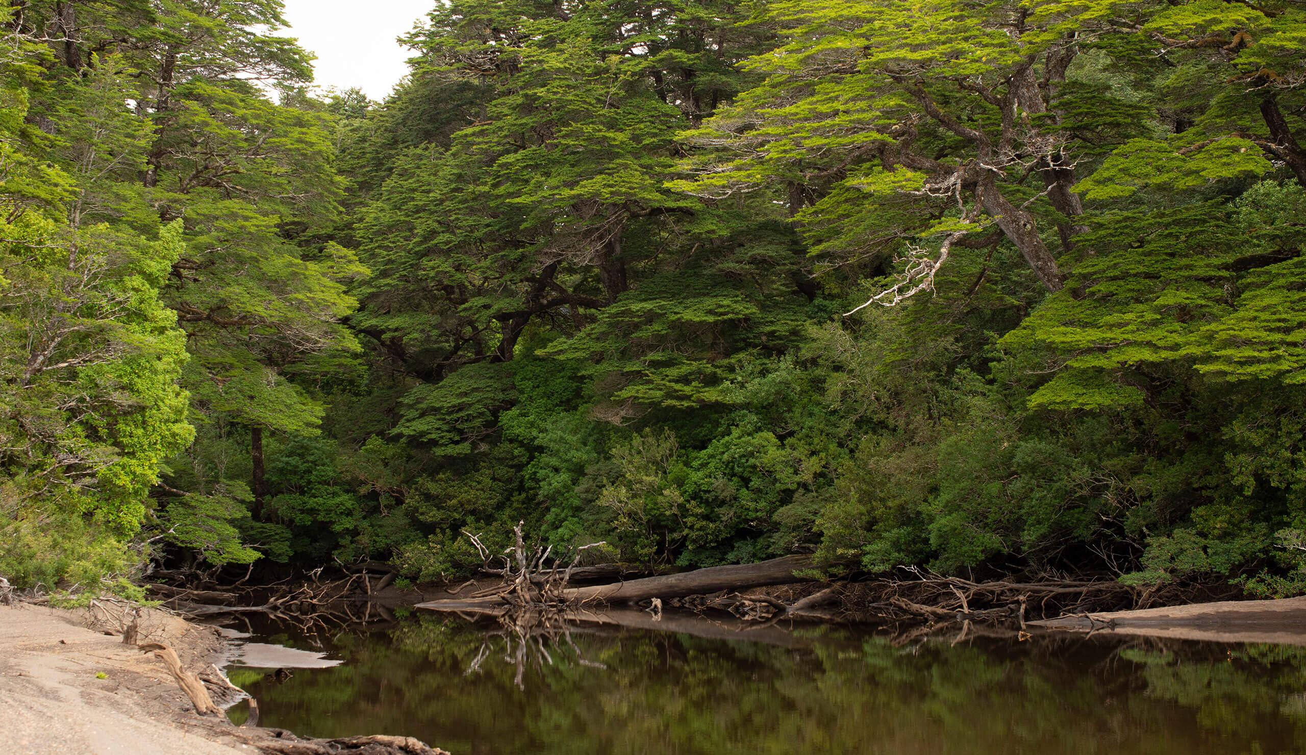 Humid temperate rainforest